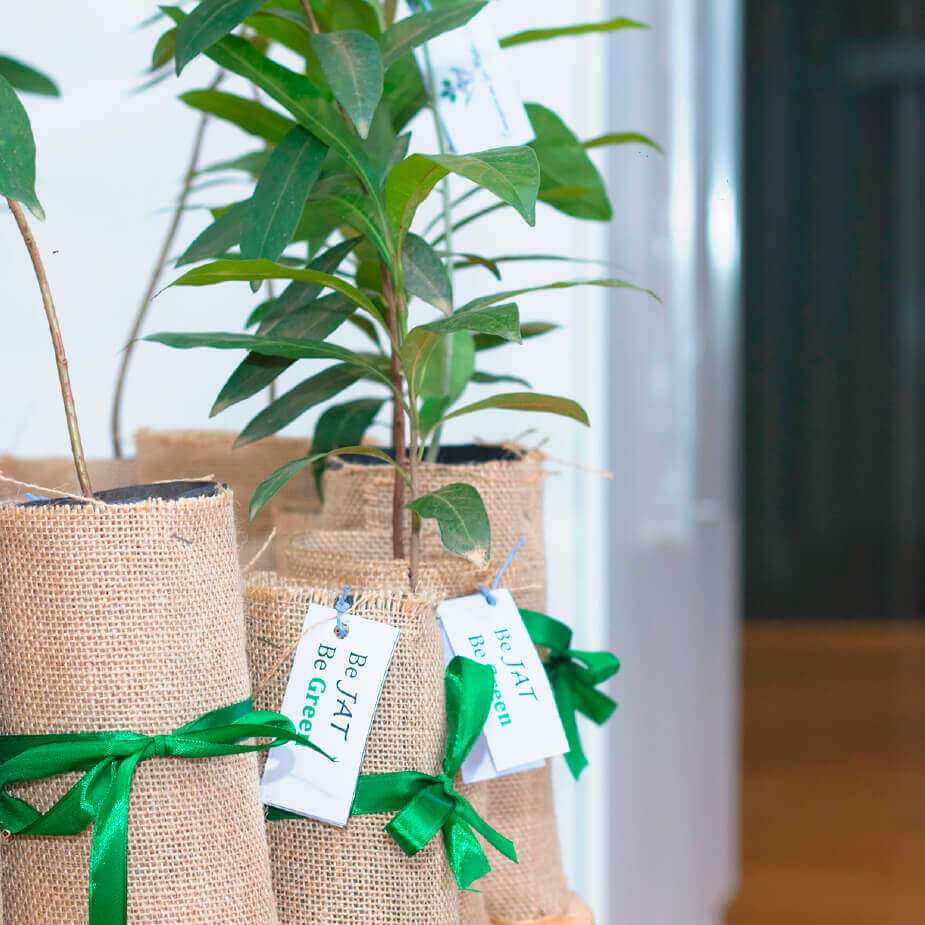 Plants of Be JAT be Green concept